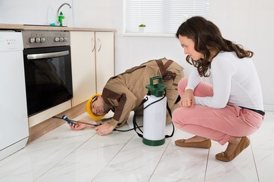 Pests at Home – What To Do?